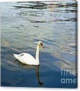 Stockholm City Harbor Swan Canvas Print