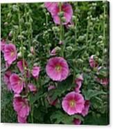 Stokrose Pink Canvas Print
