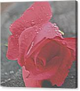 Stone Cold Rose Canvas Print