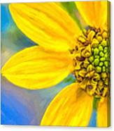 Stone Mountain Yellow Daisy Details - North Georgia Flowers Canvas Print