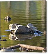 Stone Reflections Canvas Print