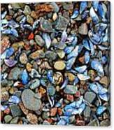 Stones And Seashells Canvas Print