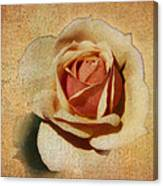 Stonewall Golden Rose Canvas Print