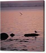 Stonington Sunrise Canvas Print