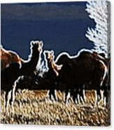 Stop And Stare V3 Canvas Print