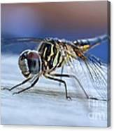 Stop By Tiger Dragon Fly Canvas Print