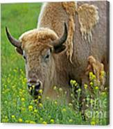Stopped To Smell The Flowers Canvas Print