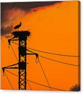 Stork At Sunset Canvas Print