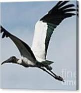 Stork In Flight Canvas Print