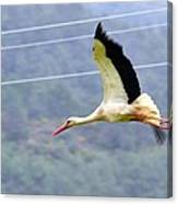 Stork In Flight Canvas Print