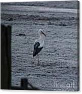 Stork On A Frosty Morning Canvas Print
