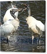 Stork Squabble Canvas Print