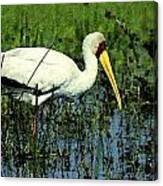 Storks Canvas Print