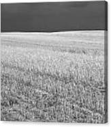 Storm On The Stubble Canvas Print