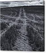 Storm Tracks Canvas Print