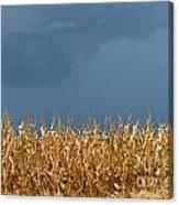 Stormy Corn Canvas Print