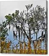 Stormy Marsh Cedar Tree Canvas Print