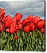 Stormy Reds Canvas Print