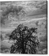 Stormy Tree Canvas Print