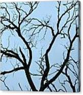 Stormy Trees Canvas Print