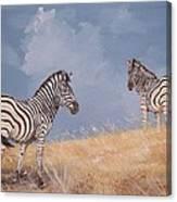 Stormy Zebra Canvas Print