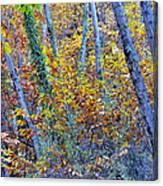 Story Rainforest Canvas Print