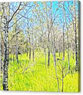 Storybook Aspens Canvas Print