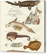 Strange Cartilageous Fish Canvas Print