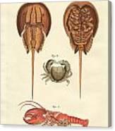 Strange Crabs Canvas Print