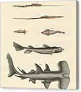 Strange Fish Canvas Print