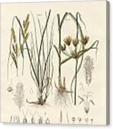 Strange Grasses Canvas Print