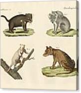 Strange Marsupials Canvas Print