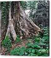 Strangler Fig Tree Roots On The Ancient Preah Khan Temple Canvas Print