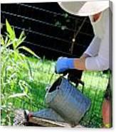 Straw Hat Gardener Canvas Print
