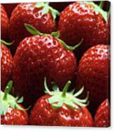 Strawberries (fragaria 'elsanta') Canvas Print