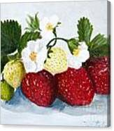 Strawberries With Blossoms Canvas Print