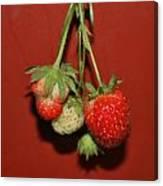 Strawberry Delicious Canvas Print