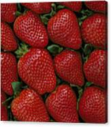 Strawberry Flats Canvas Print