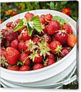 Strawberry Harvest Canvas Print