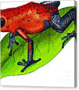 Strawberry Poison-dart Frog Canvas Print