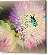 Strawflower Awakening Canvas Print