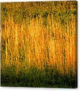 Straw Landscape Canvas Print