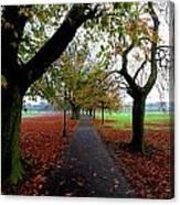 Stray Beauty In Autumn No 2 Canvas Print