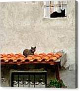 Stray Cats Art Composition Canvas Print