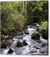 Stream At Glencar Canvas Print