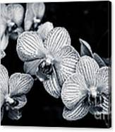 Stream Of Orchids Canvas Print