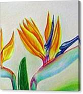 Strelitzia - Together Canvas Print