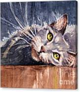 Stretch Canvas Print