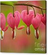 String Of Hearts Canvas Print