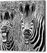 Striped Donkeys Zebra Chapman's Race Canvas Print